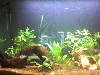 aquarium 120L amazonien... Snapsh19