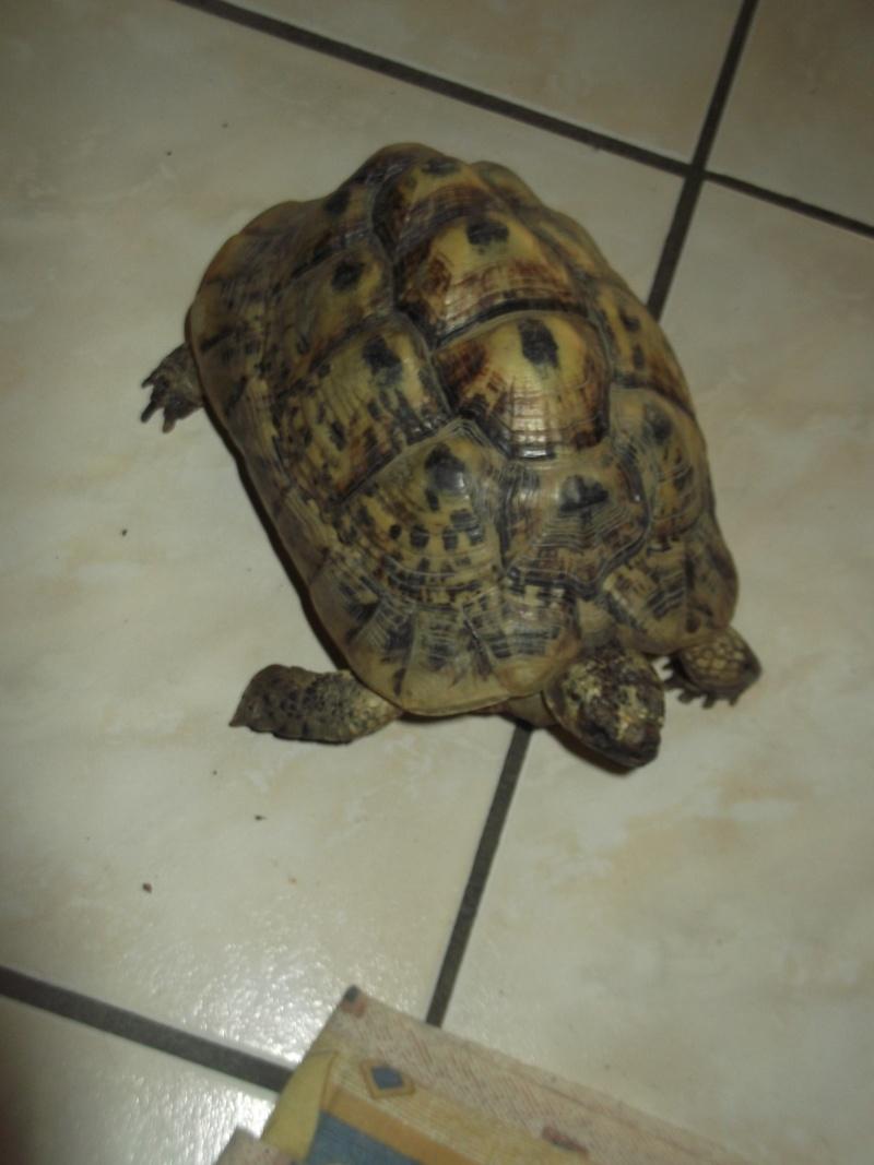 Identifications tortues de Magalie66 Dscf7510