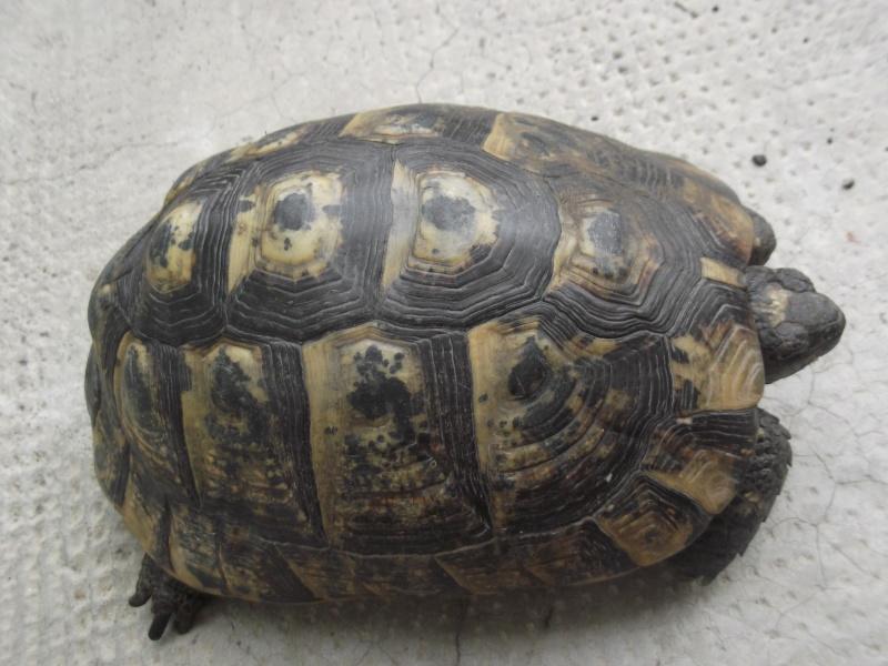 Identifications tortues de Magalie66 Dscf8011