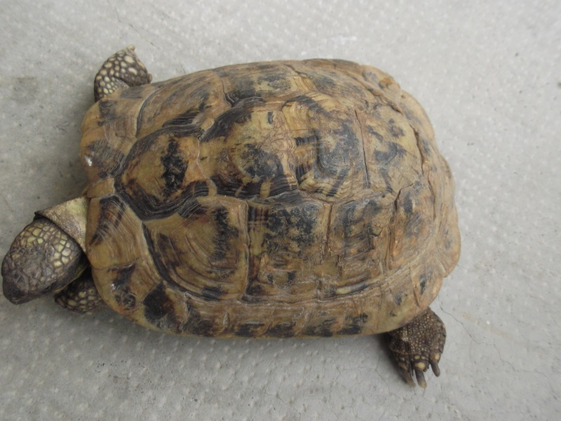 Identifications tortues de Magalie66 Dscf8119