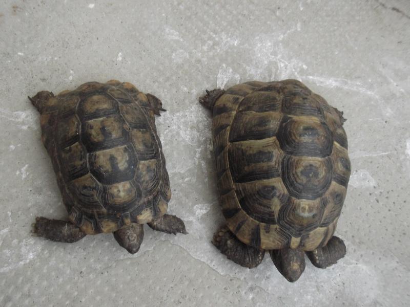 Identifications tortues de Magalie66 Dscf8120