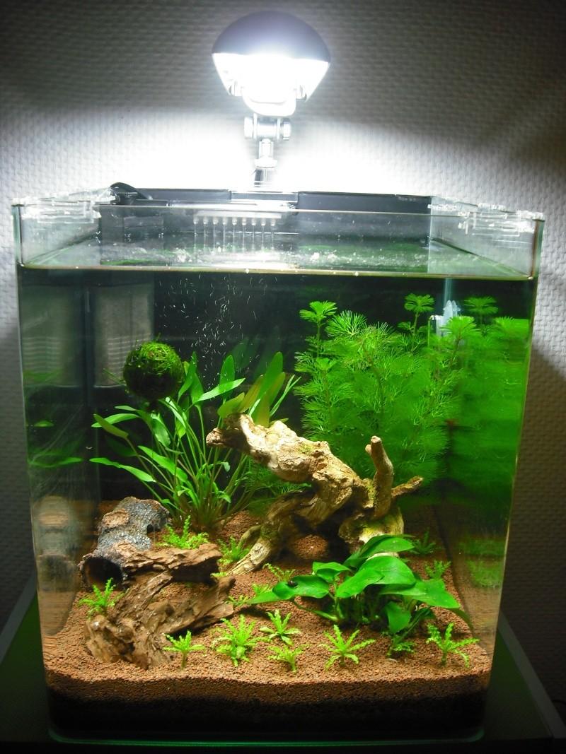 Nano 30 litres pour crevettes Dscf0015