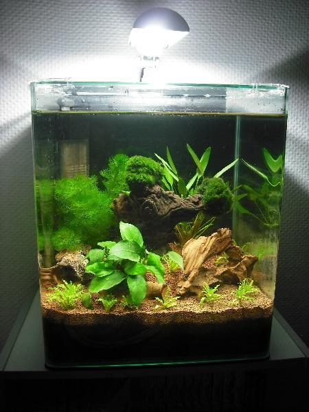 Nano 30 litres pour crevettes Sans_t11