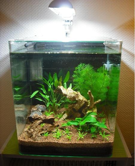 Nano 30 litres pour crevettes Sans_t13