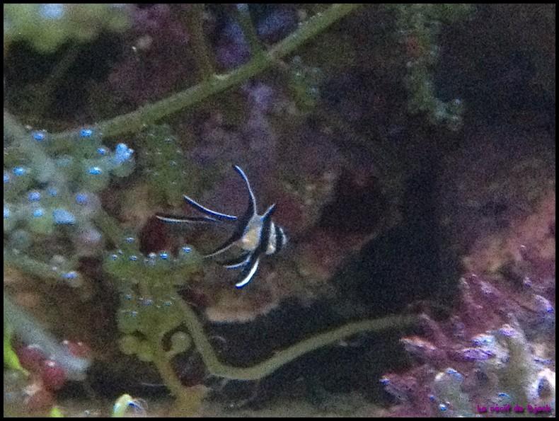 Nouvelle de Némoptérapogon Img_2031