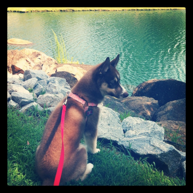 Classic Photos Of Your Huskies Photo_39