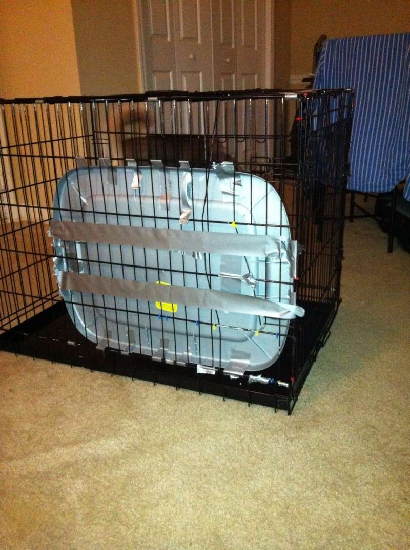 What is the most expensive item your puppy destroyed?  - Page 2 Photo_42