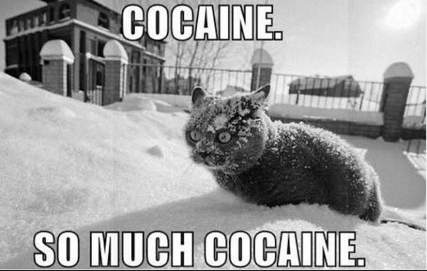 Animaux Cocain10
