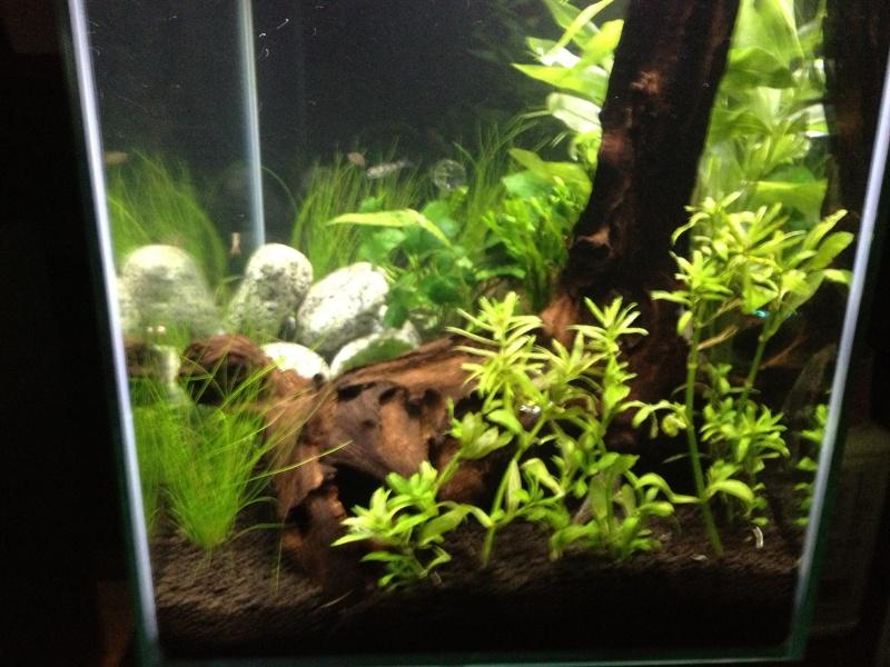 Fluval Edge 46L community planted tank... Img_0612
