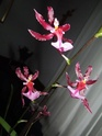 Mit welche Orchidee am besten anfangen? Orchid18
