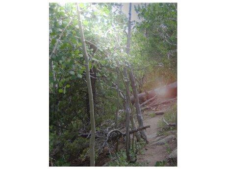 2012: Objet métallique étrange trouvé sur mon terrain! (Fake) Samsun12