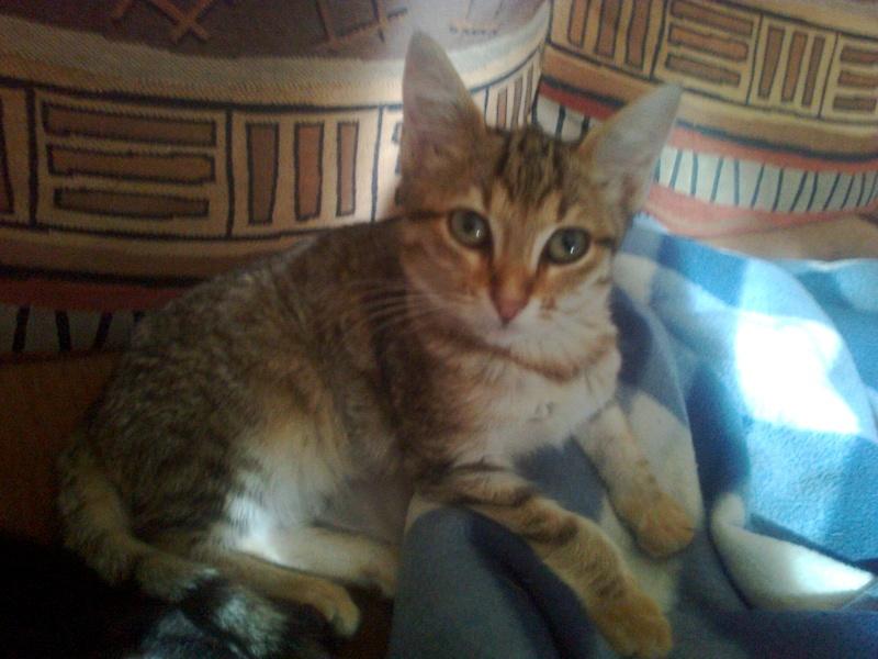 Quatre nouveaux chatons. Photo011