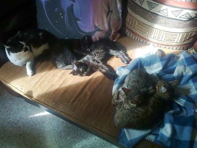Quatre nouveaux chatons. Photo013