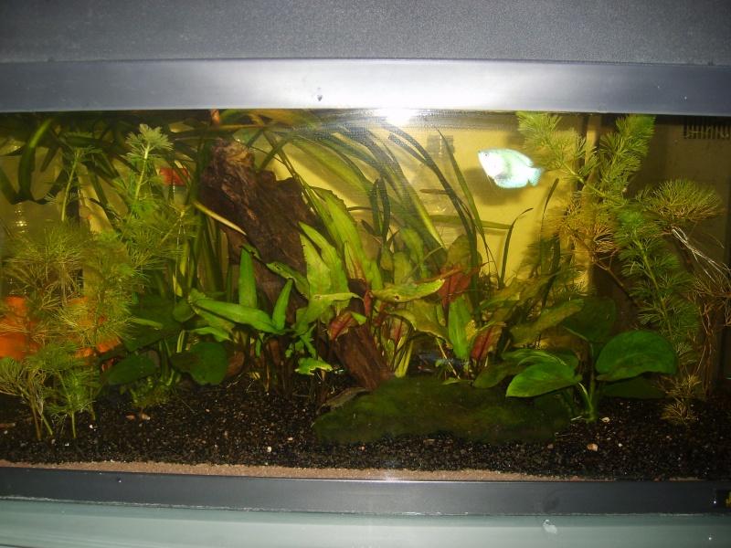 enfin mon aquarium S6001312
