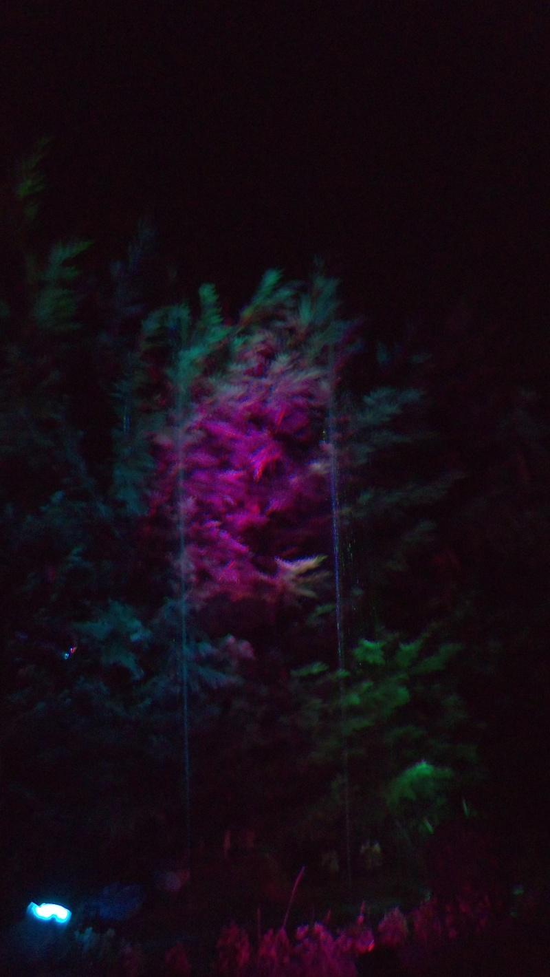 Spectacles nocturnes - Créations 100_0010