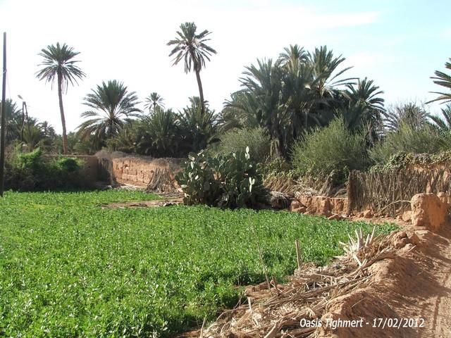 [Maroc Camp/Découverte] Camping Aaïn Nakhla à Tighmert 090810