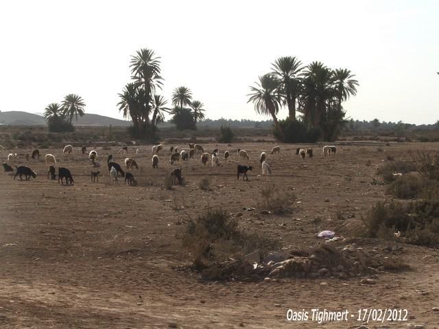 [Maroc Camp/Découverte] Camping Aaïn Nakhla à Tighmert 091010
