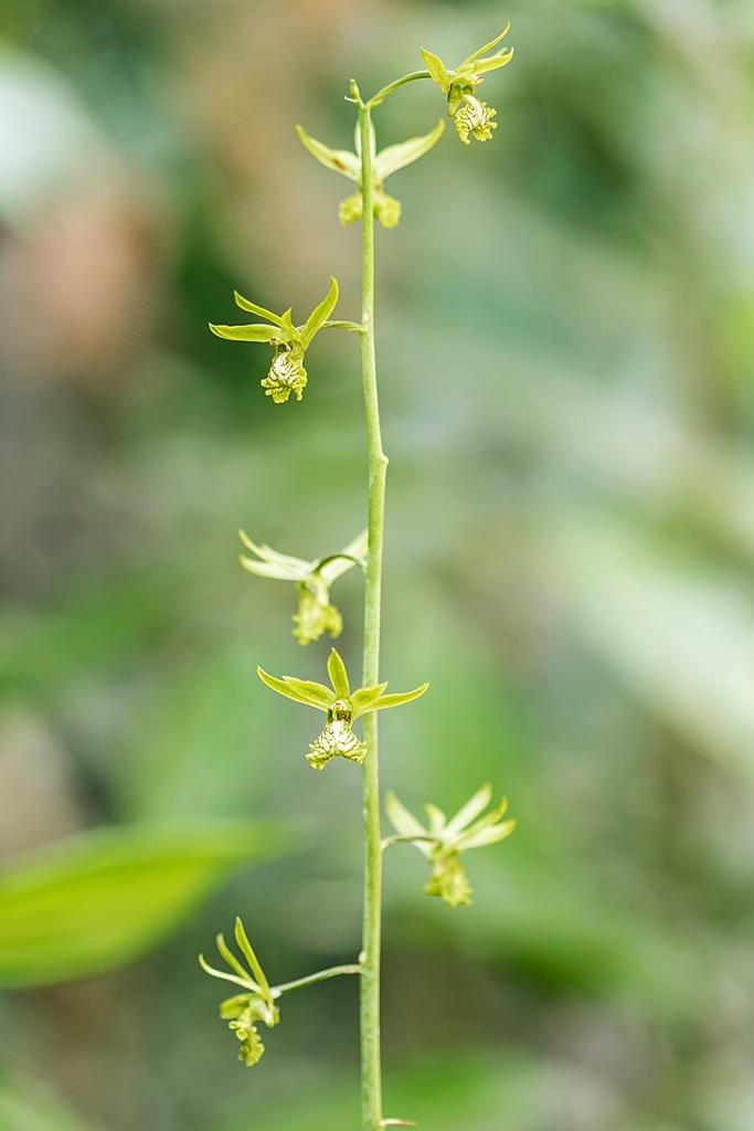 Orchideen 3 (fortlaufende Seiten 300 bis 400) - Seite 57 Euloph11