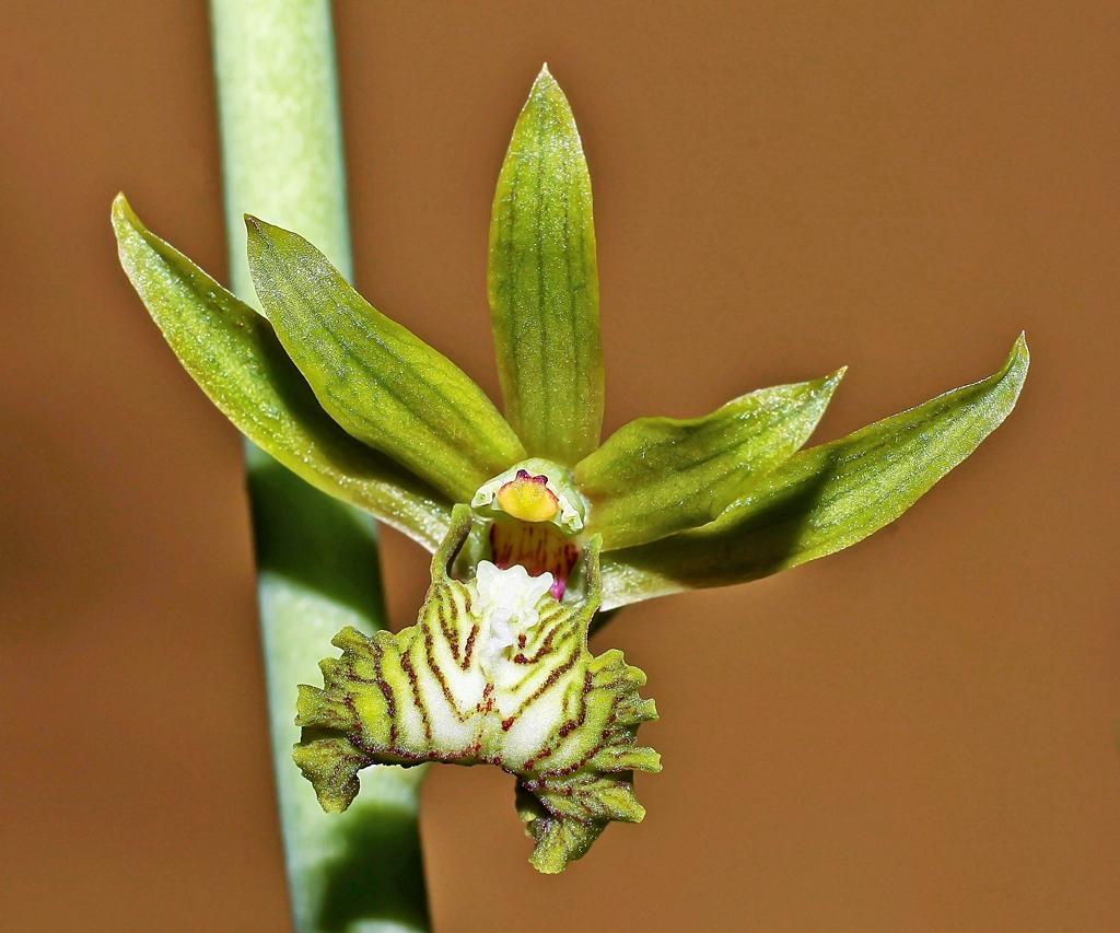 Orchideen 3 (fortlaufende Seiten 300 bis 400) - Seite 57 Euloph13