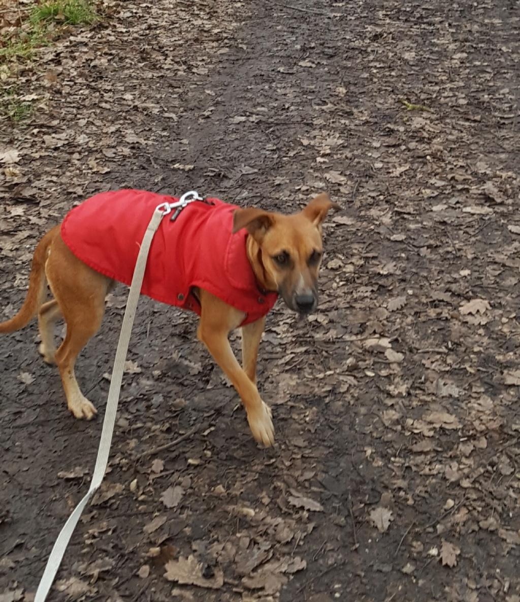 TWILLY, jeune chienne d'à peine 1 an, environ 10 kg - Marrainée par Muriel 20210110