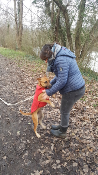 TWILLY, jeune chienne d'à peine 1 an, environ 10 kg - Marrainée par Muriel 20210111