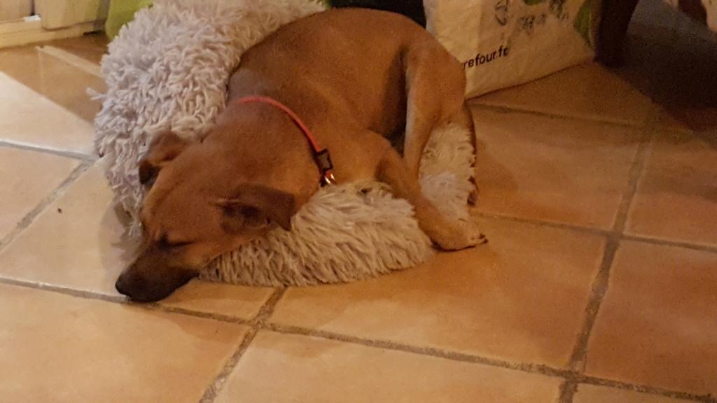 TWILLY, jeune chienne d'à peine 1 an, environ 10 kg - Marrainée par Muriel 20210112