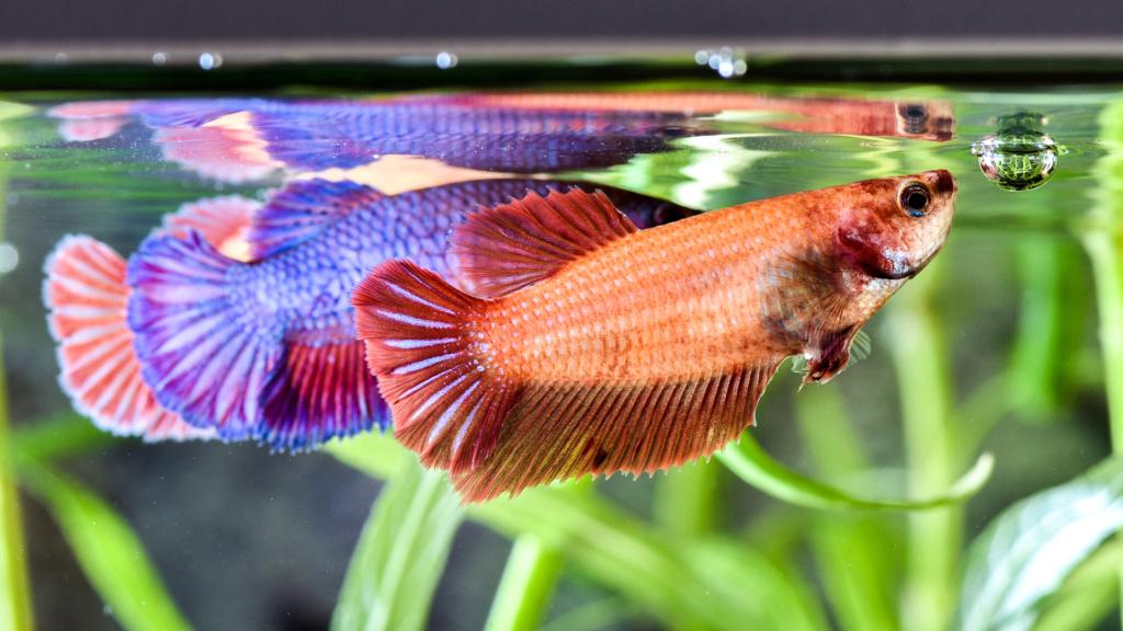 Aquarium Nausicaa Dsc_0629