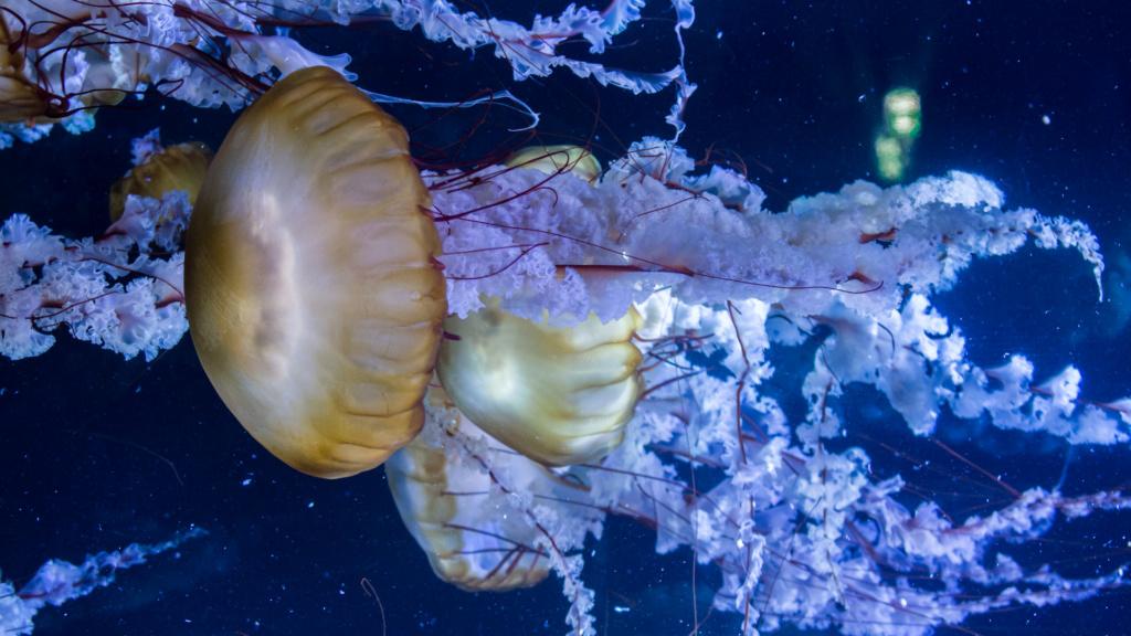 Aquarium Nausicaa Dsc_3811