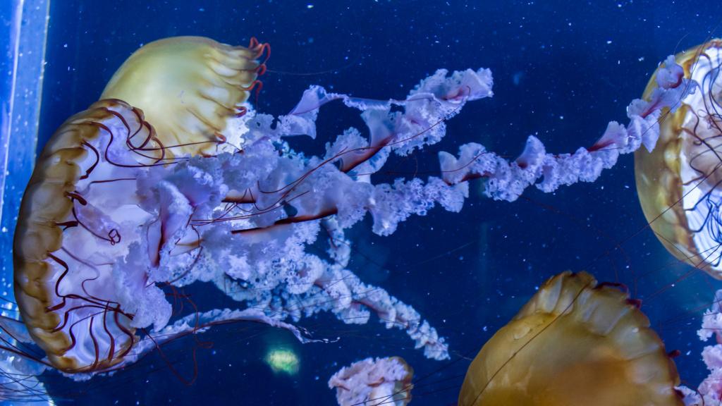 Aquarium Nausicaa Dsc_3812