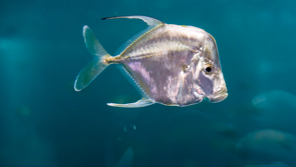 Aquarium Nausicaa Dsc_3910