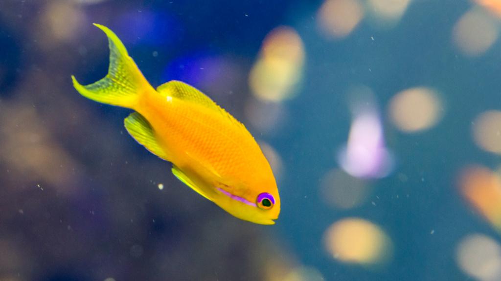 Aquarium Nausicaa Dsc_3912