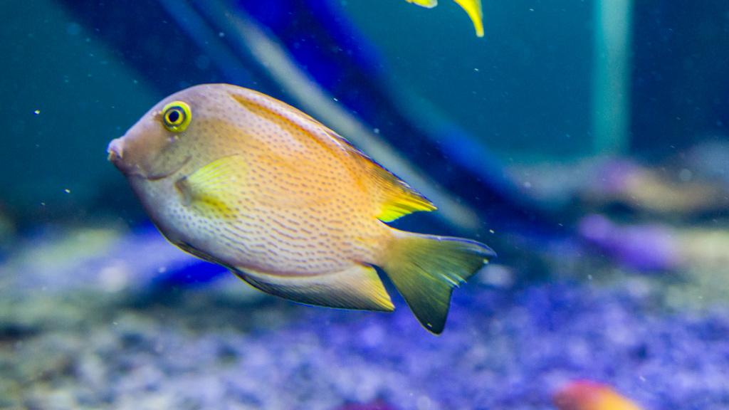 Aquarium Nausicaa Dsc_3913