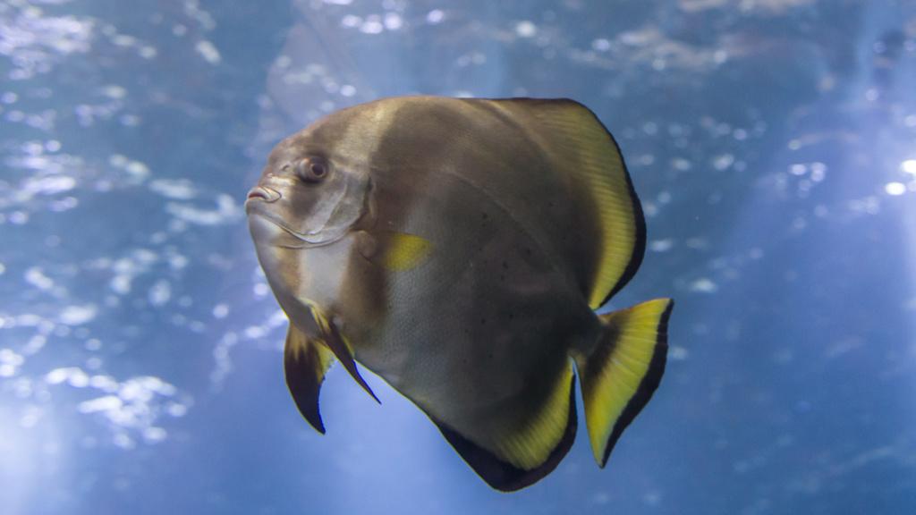 Aquarium Nausicaa Dsc_3915
