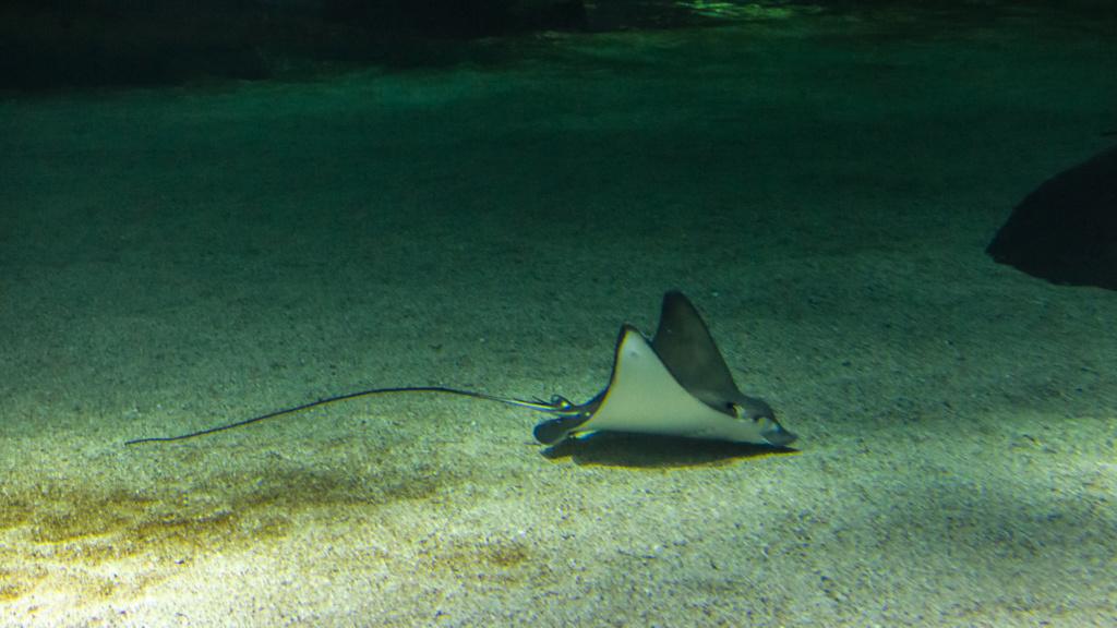 Aquarium Nausicaa Dsc_3916