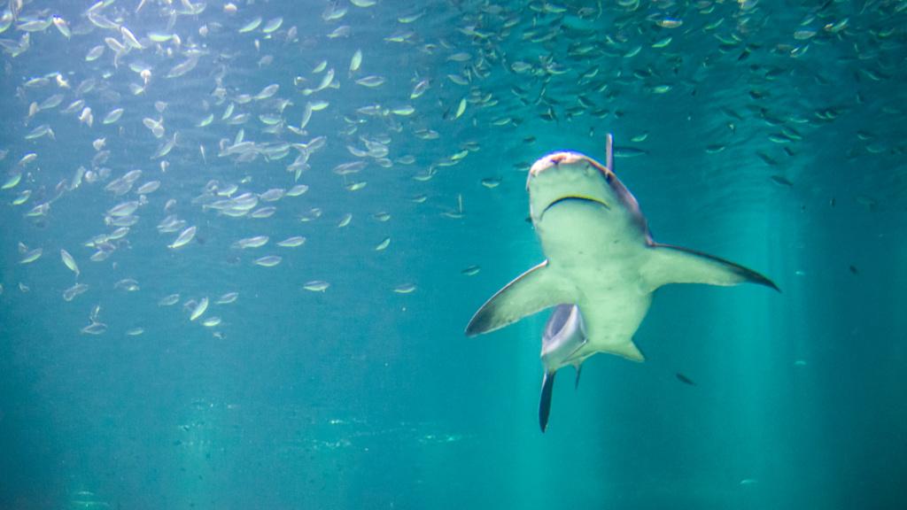 Aquarium Nausicaa Dsc_3917