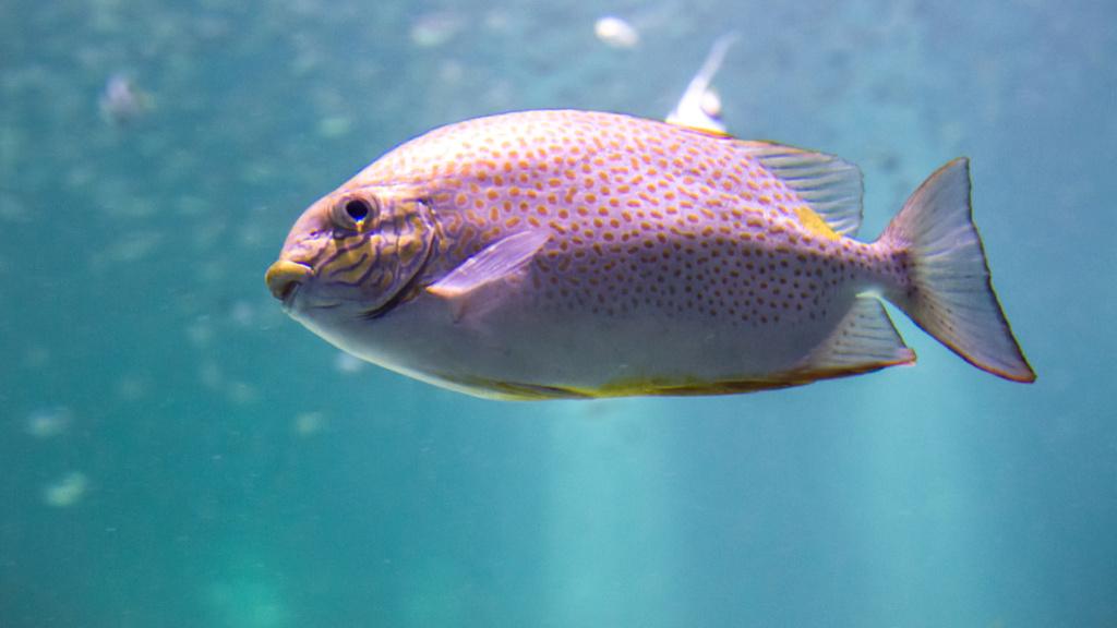 Aquarium Nausicaa Dsc_3918