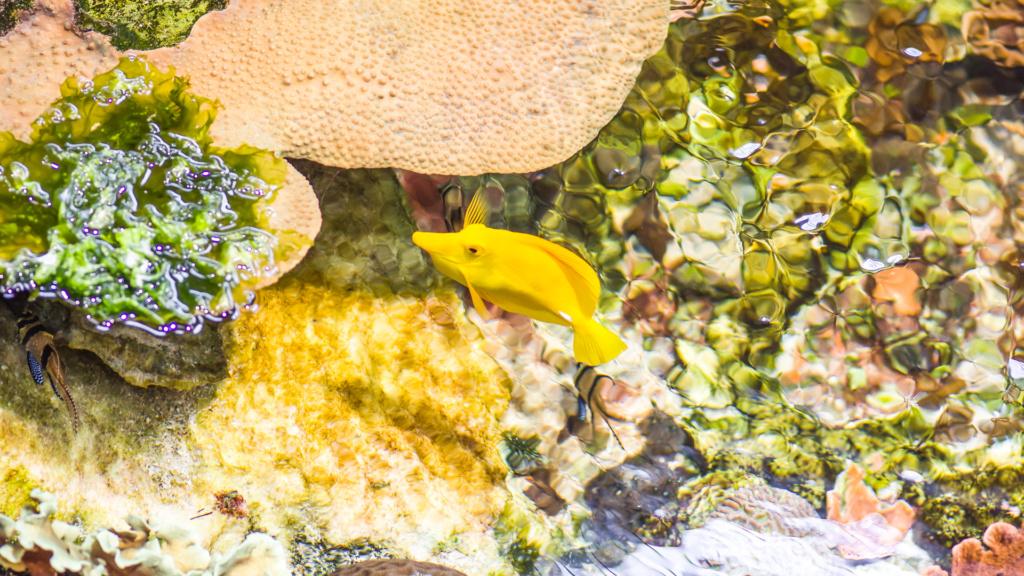 Aquarium Nausicaa Dsc_3922