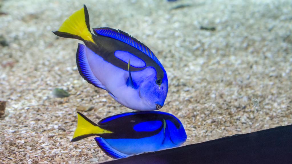 Aquarium Nausicaa Dsc_4013