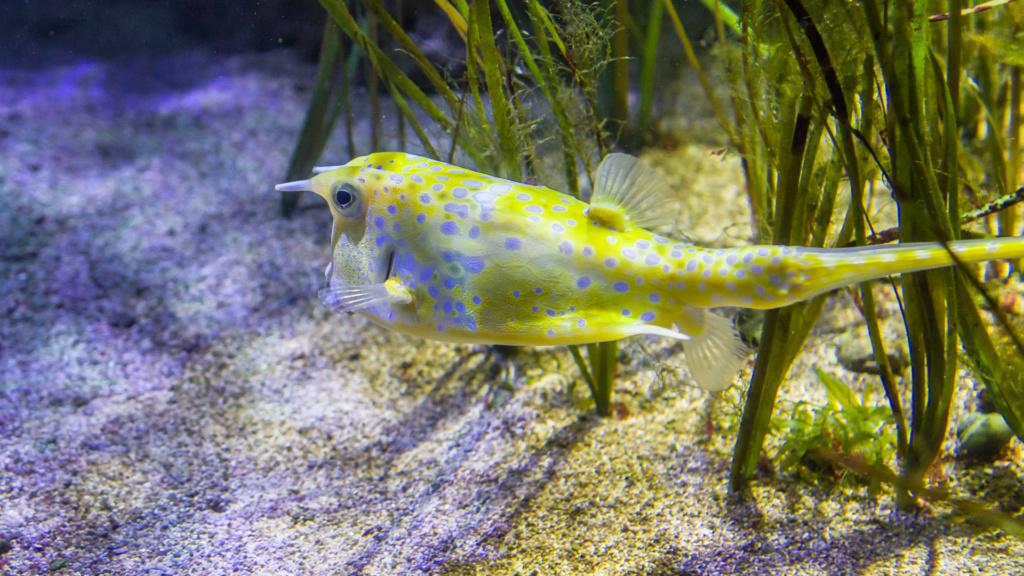 Aquarium Nausicaa Dsc_4016