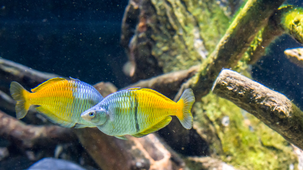 Aquarium Nausicaa Dsc_4017