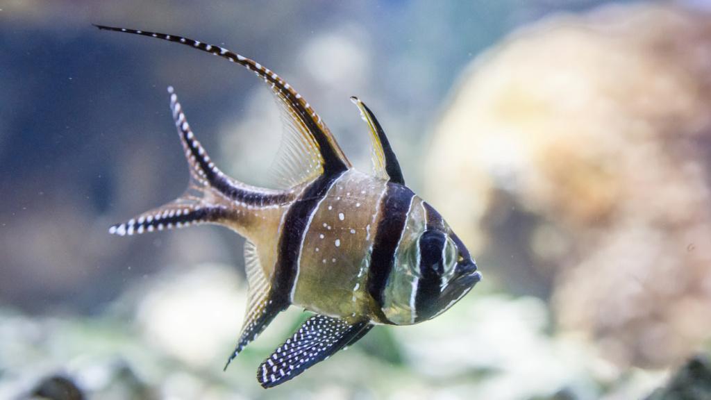 Aquarium Nausicaa Dsc_4018