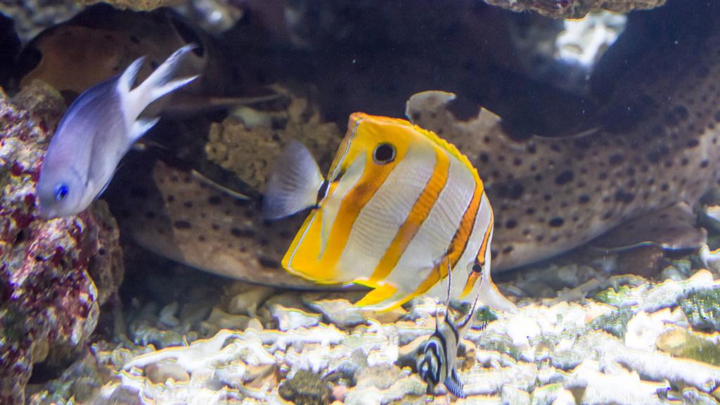 Aquarium Nausicaa Dsc_4019