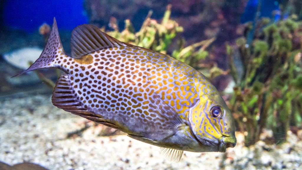 Aquarium Nausicaa Dsc_4020