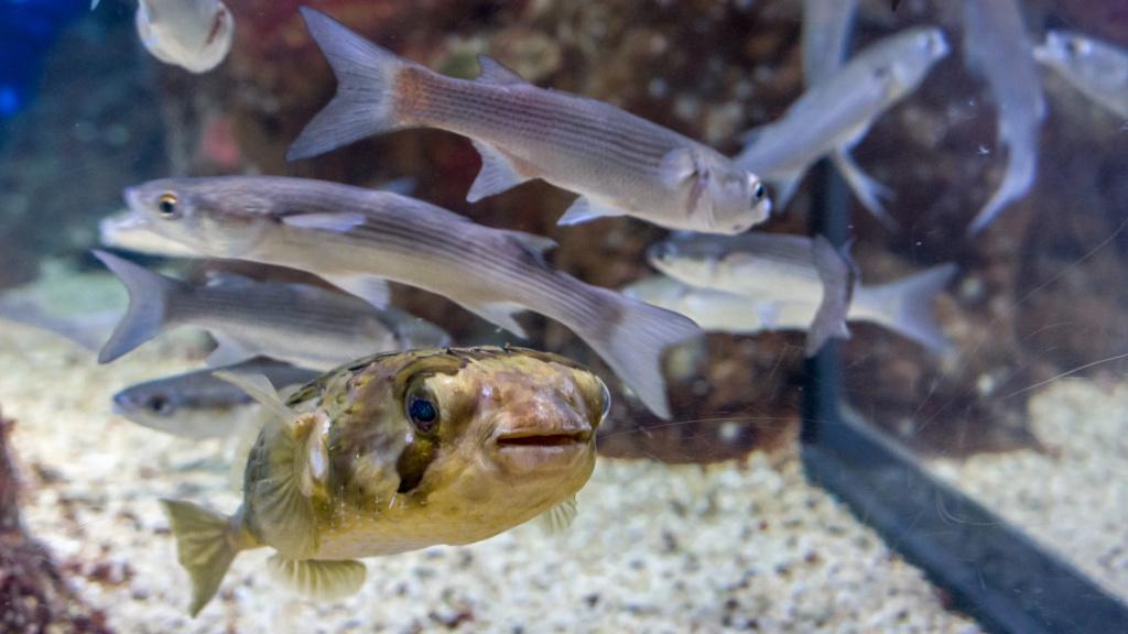 Aquarium Nausicaa Dsc_4022