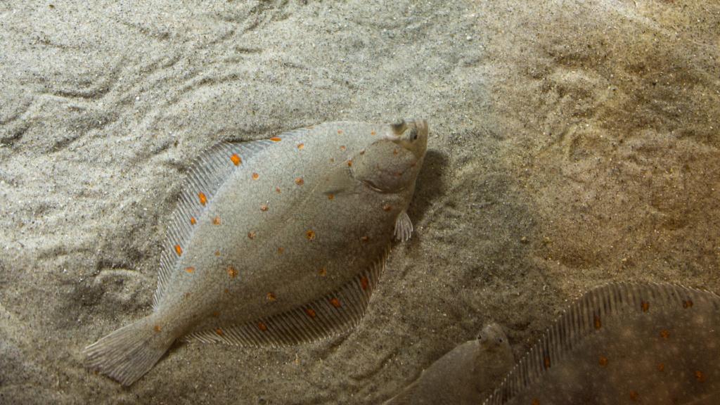 Aquarium Nausicaa Dsc_4023