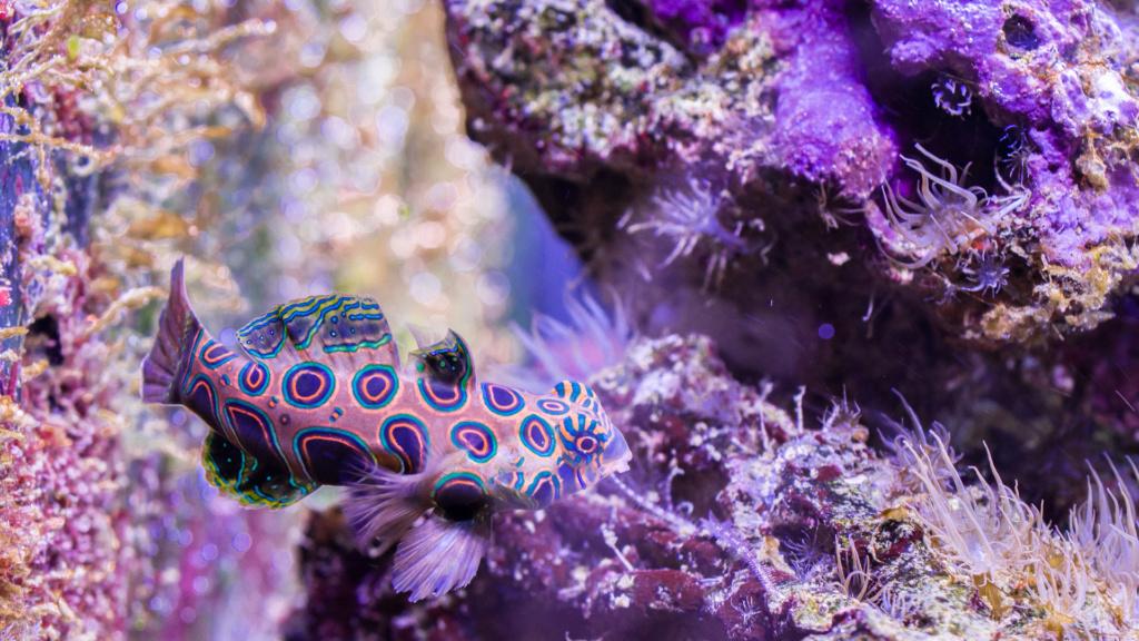 Aquarium Nausicaa Dsc_4111