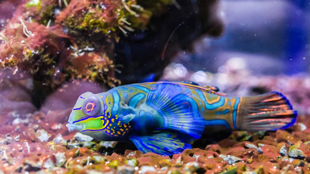 Aquarium Nausicaa Dsc_4112