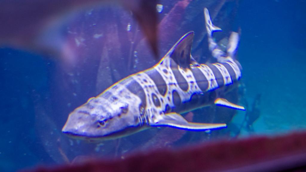 Aquarium Nausicaa Dsc_4117