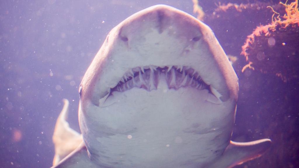 Aquarium Nausicaa Dsc_4120