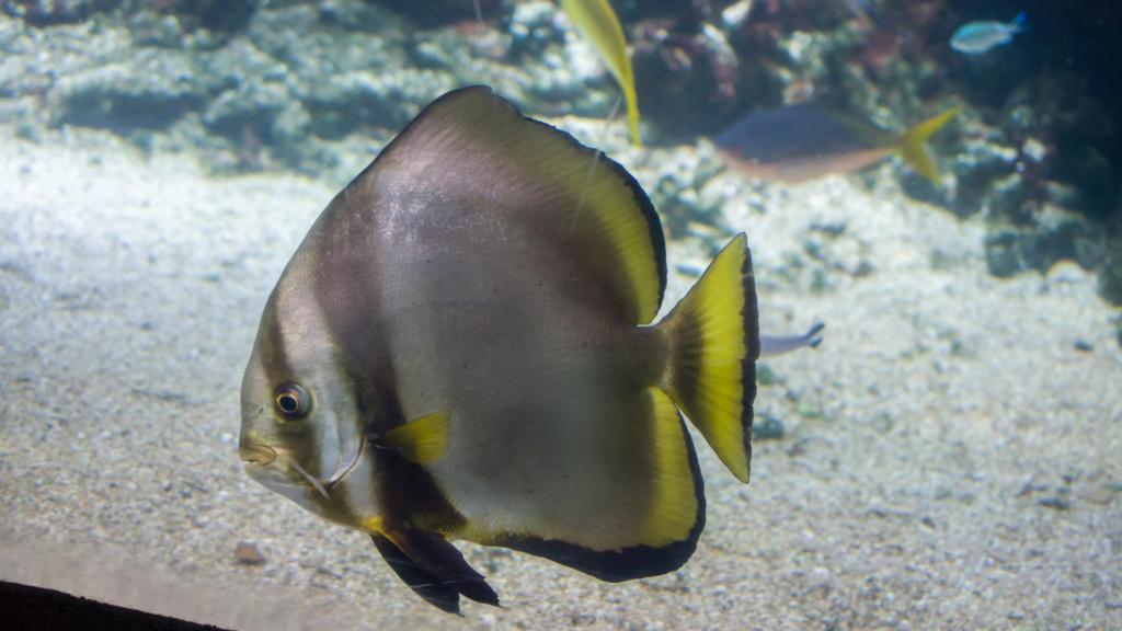 Aquarium Nausicaa Dsc_4121